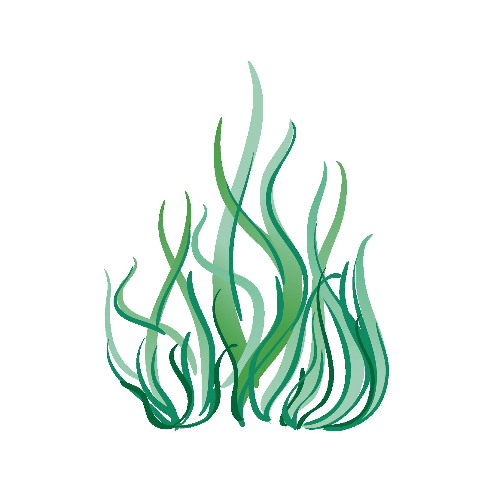 Подушки с морскими водорослями