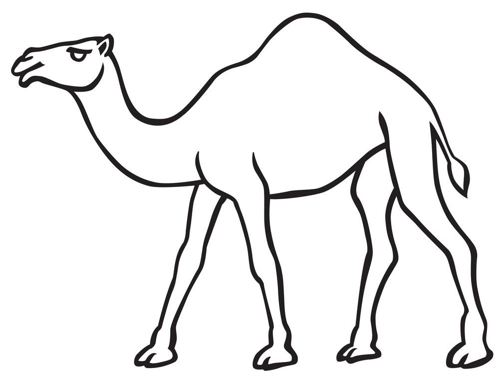 Подушки с шерстью верблюда